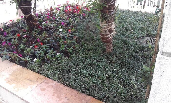 Este pequeno jardim conta com a presença de grama preta