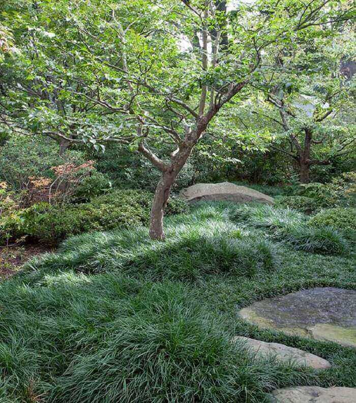 A grama preta ganha destaque junto as pedras