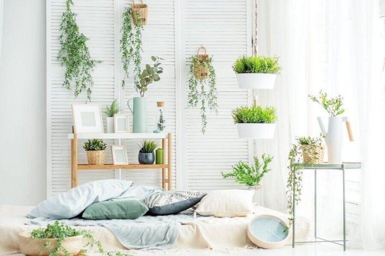 decoração clean para ambiente com vários vasos de plantas