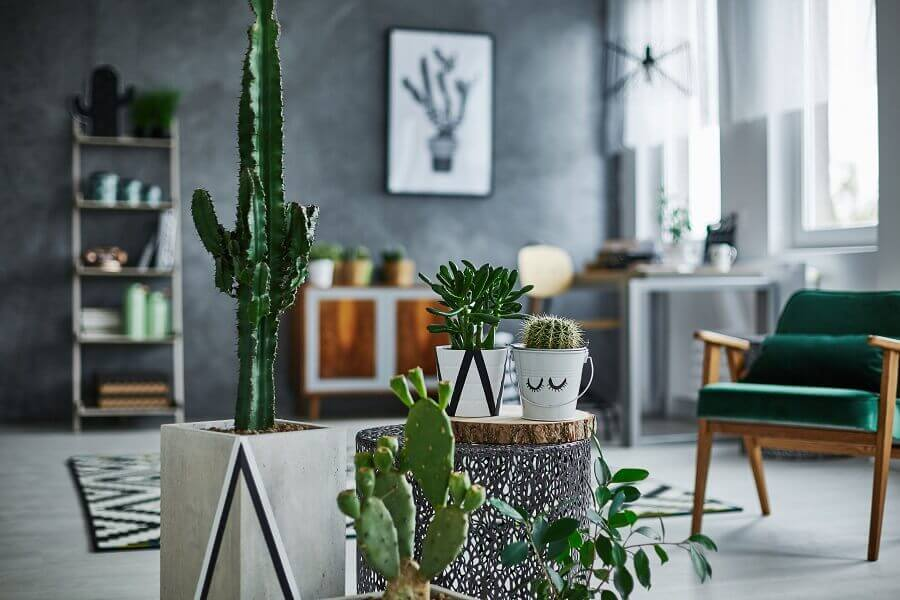decoração para sala moderna com cimento queimado e vasos de cactos