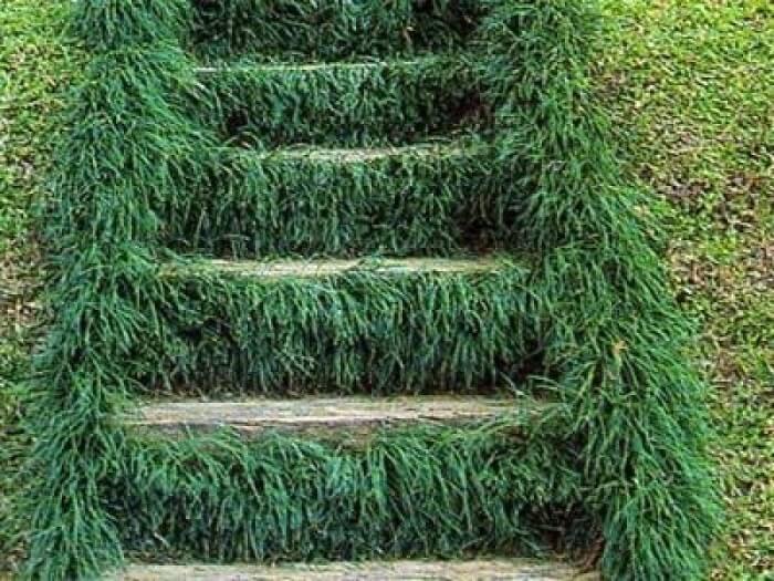 A grama preta preenche os espaços por entre os degraus da escada