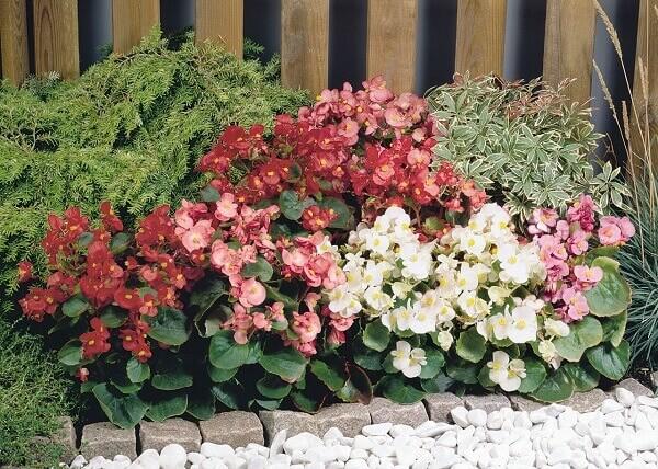 As begônias são plantas que purificam o ambiente