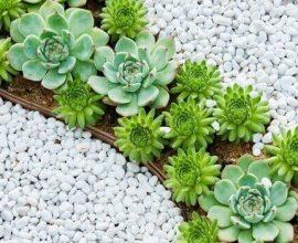 Jardim de suculentas e pedras dolomitas brancas realçam a cor de cada flor
