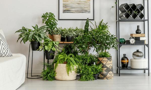 Plantas que purificam o ambiente e ficam lindas na decoração. Fonte: Crysmax
