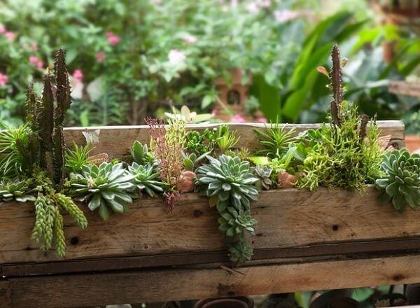 Forme um lindo jardim de suculentas com um pedaço de madeira