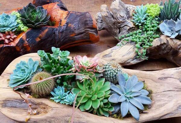 Jardim de cactos e suculentas cultivadas em troncos de madeira