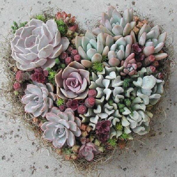 O jardim de suculentas podem formar um lindo arranjo de coração