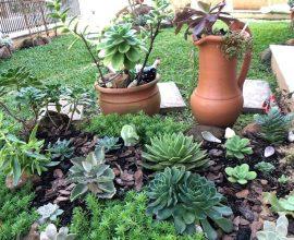 Dicas de como fazer jardim de suculentas. Fonte: Pinterest