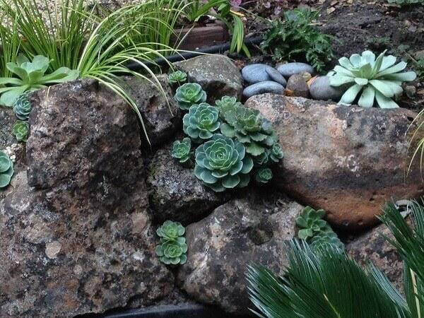 Jardim de suculentas e pedras