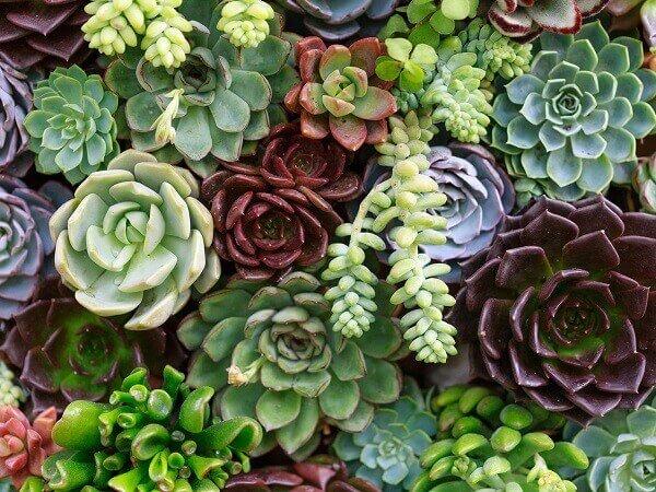 Diferentes tipos de flores formam um lindo jardim de suculentas