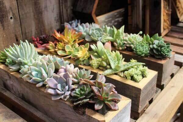 Mini jardim de suculentas foi montado em caixas de madeira