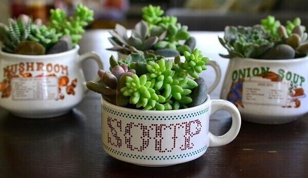 Mini jardim de suculentas montadas em potes de vidro