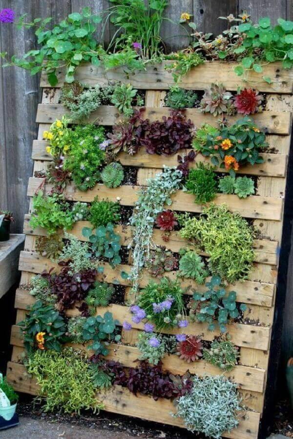 Monte um jardim vertical com suculentas utilizando um pallet de madeira