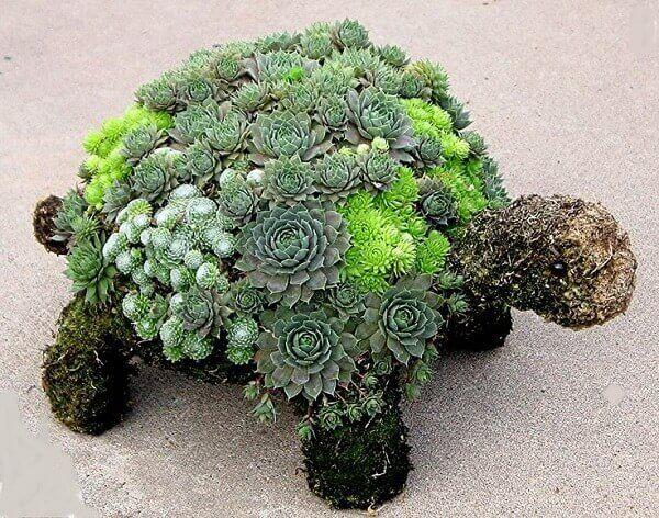 O casco da tartaruga recebeu uma jardim de suculentas especial
