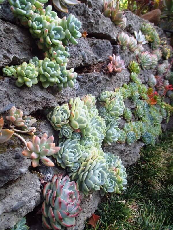 O jardim de suculentas e pedras encanta a decoração do ambiente