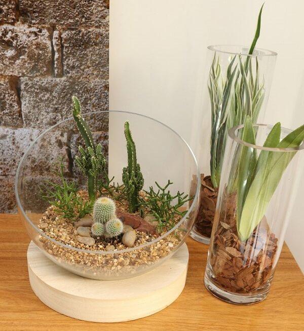 Mini jardim de suculentas para decorar os ambientes internos de casa