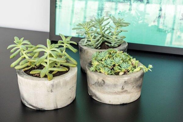Vasos de concreto com jardim de suculentas