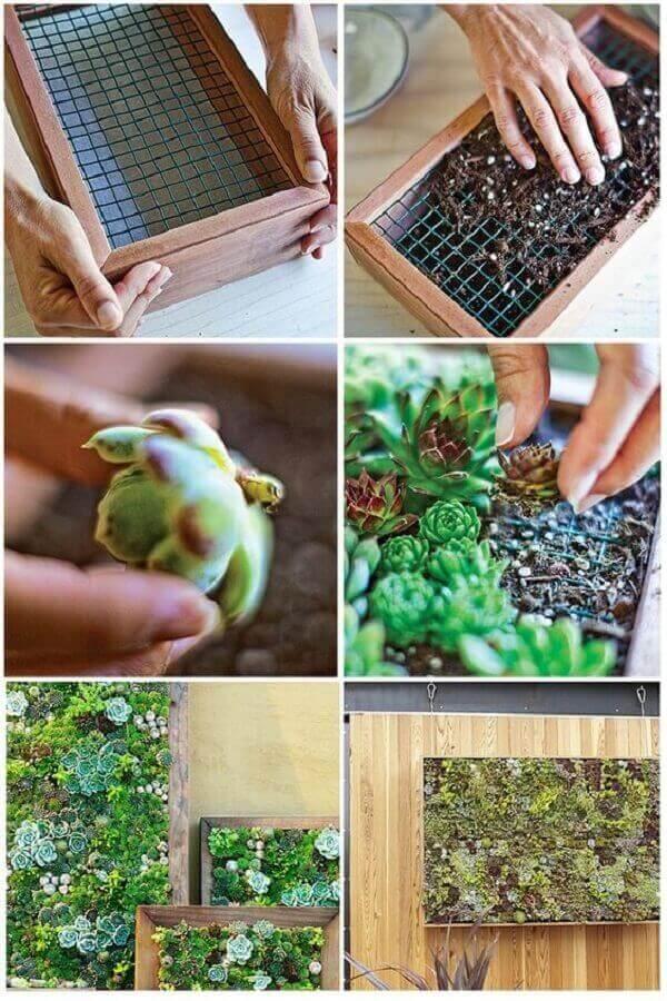 Passo a passo simples de como montar um jardim vertical de suculentas