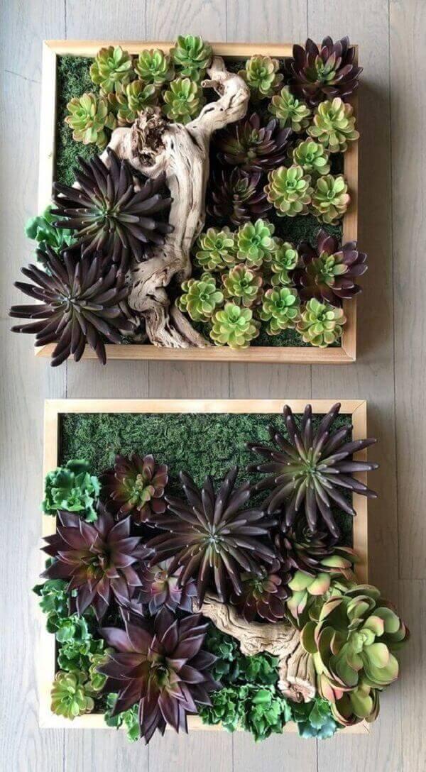 O jardim de suculentas forma a composição de dois quadros no ambientes