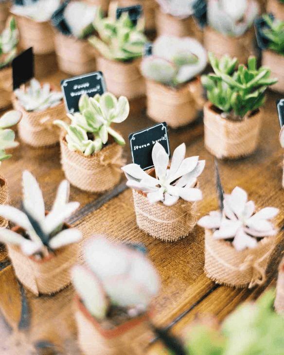 Decoração de festa simples com suculentas para entregar de lembrancinhas