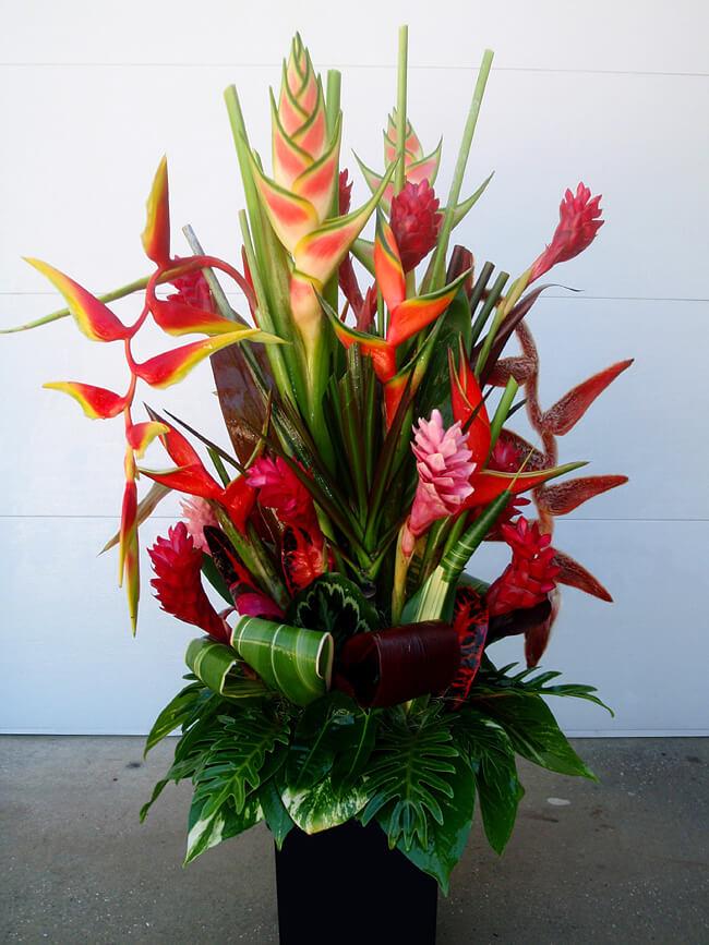 flor helicônia com plantas exóticas