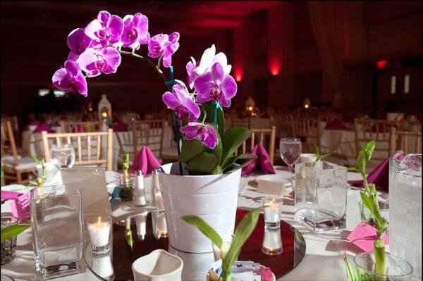 flores para casamento orquídeas