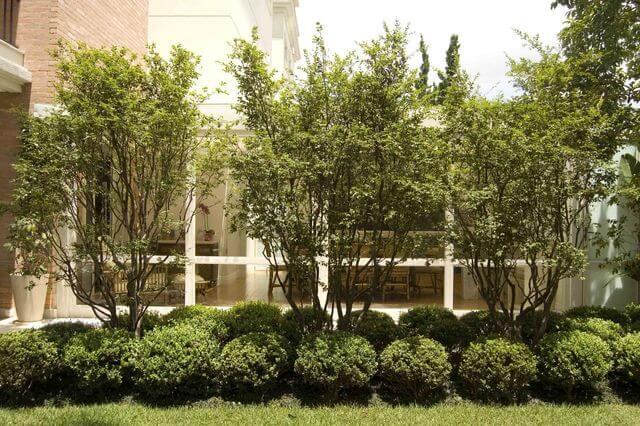jardim residencial - jardim em casa com árvores