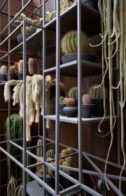 jardim residencial - jardim vertical de cactos