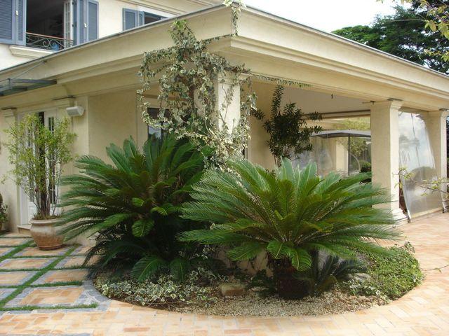 jardim residencial - paisagismo com cicas