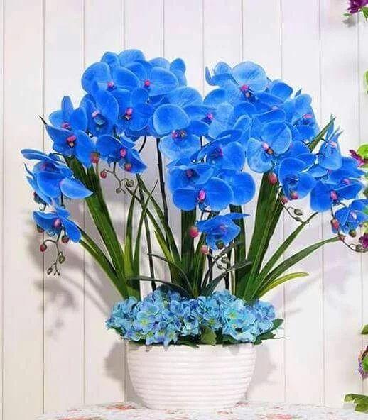 orquídea azul - arranjo com orquídeas e outras plantas