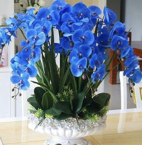 orquídea azul - arranjo grande com orquídea azul