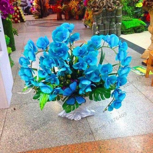 orquídea azul - arranjo grande de orquídea azul