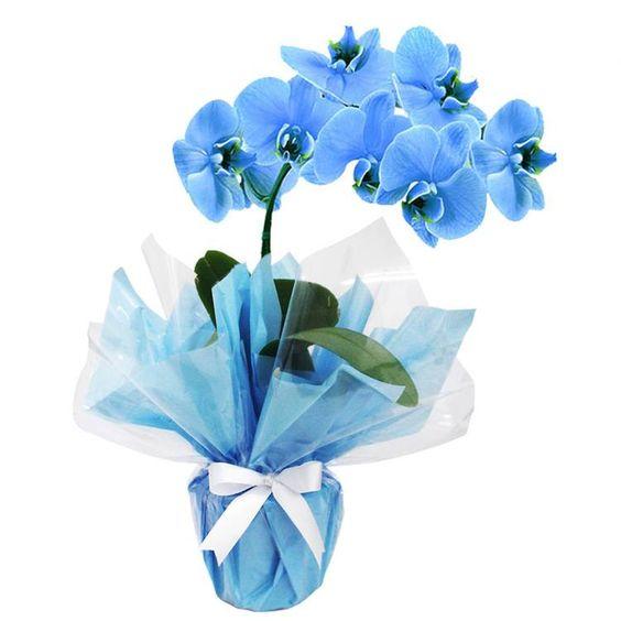 orquídea azul - arranjo pronto de orquídea azul