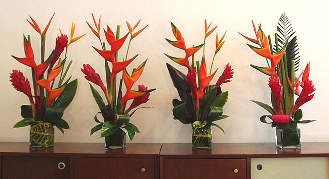 Decore sua sala com lindas plantas e fores tropicais