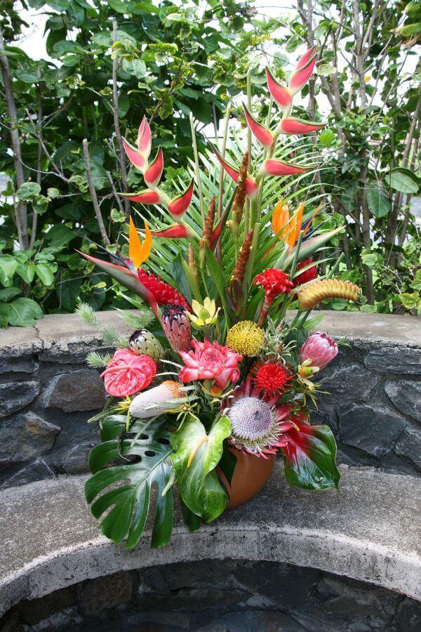 Plantas tropicais na decoração de jardim