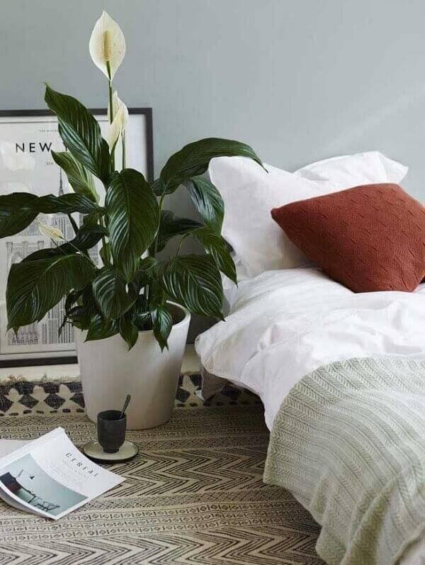 O lírio da paz é uma das plantas para quarto que melhorar a qualidade do ar
