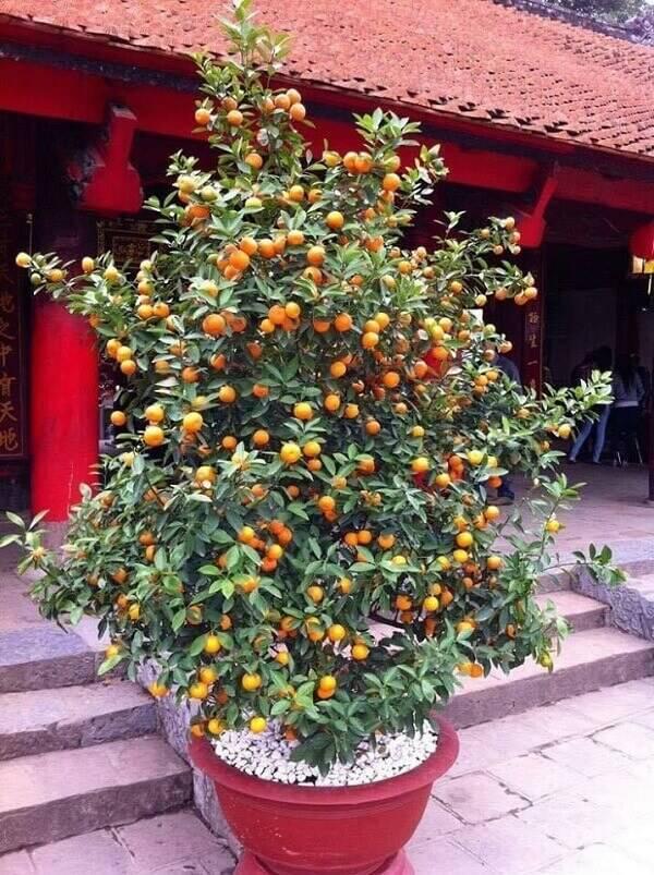 Posicione as árvores frutíferas na entrada da casa