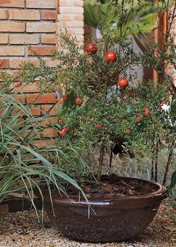 Algumas árvores frutíferas podem ser cultivadas em vaso, como a romã
