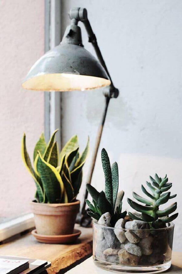A espada de são jorge e suculentas são plantas para quarto que se adaptam bem aos ambientes internos