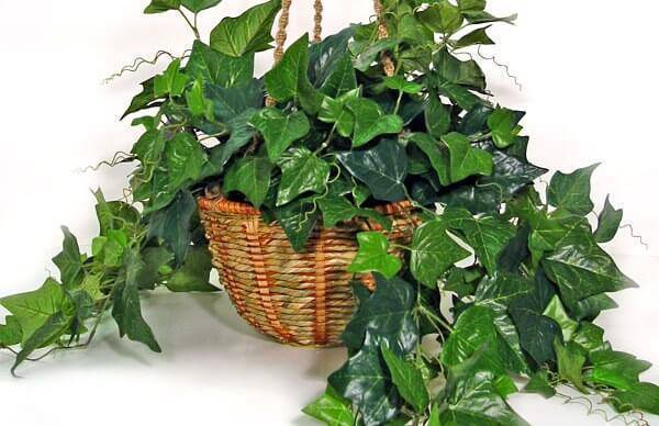 A Hera é uma das plantas para quarto que melhoram a qualidade do ar