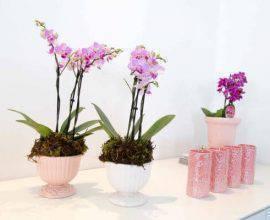 lamarcon-mini-orquídeas-para-decoracao