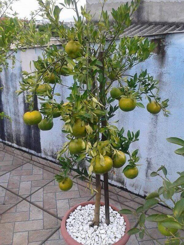 Aproveite o espaço do terraço e cultive árvores frutíferas