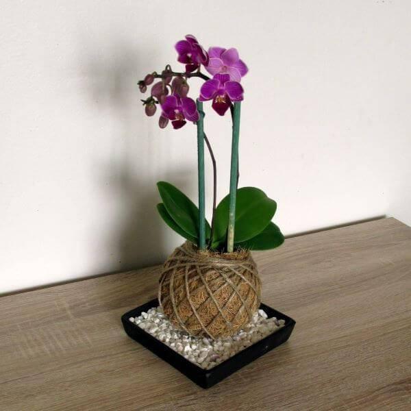 Mini orquídea com kokedama
