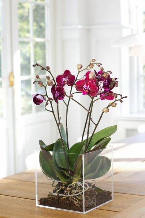Mini orquídea com vaso de acrílico