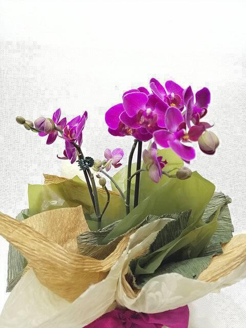 mini orquídea roxa na decoração