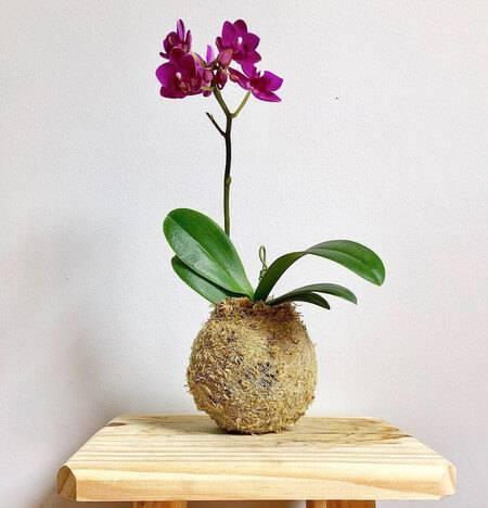 Capriche na escolha do vaso da sua mini orquídea