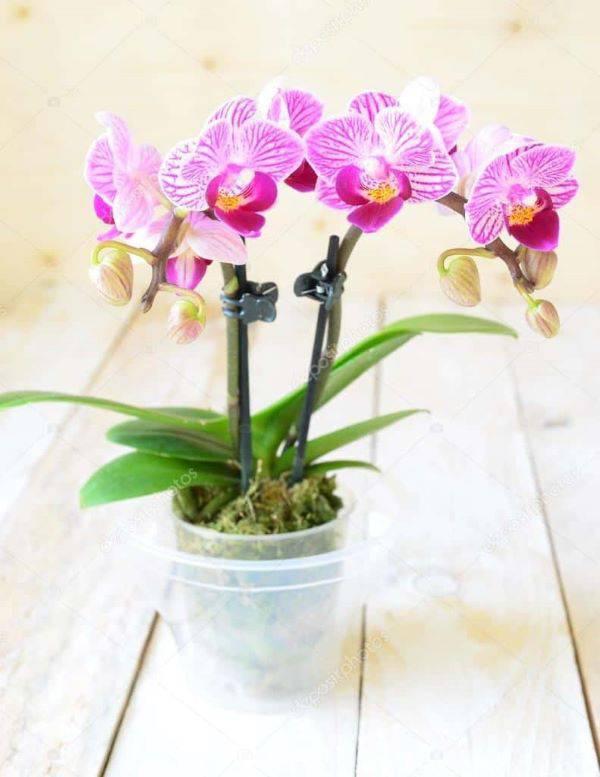 Mini orquídea decorando a sala de estar
