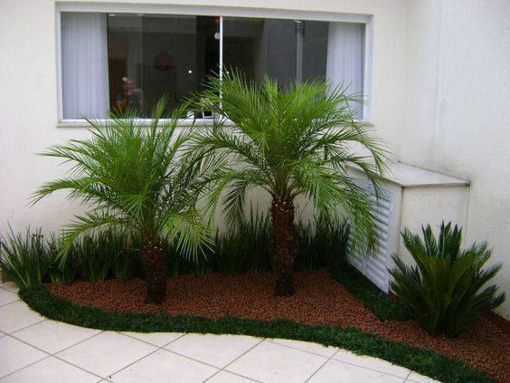 palmeira fênix - canteiro em quintal com palmeira fênix