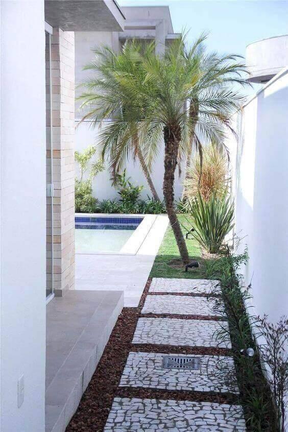 palmeira fênix - quintal com palmeira fênix
