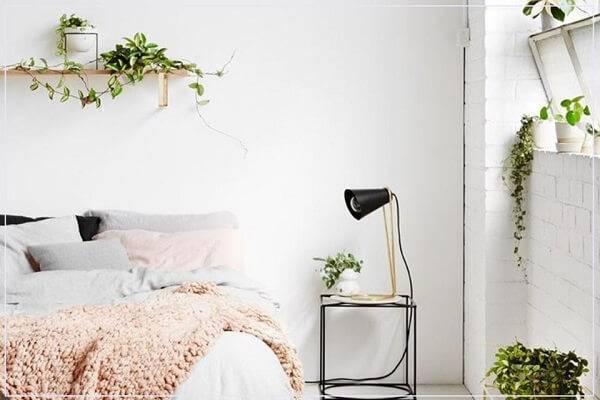 A hera é uma das plantas para quarto que deve ser cultivada sobre prateleiras